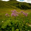 dolomiti_color_05